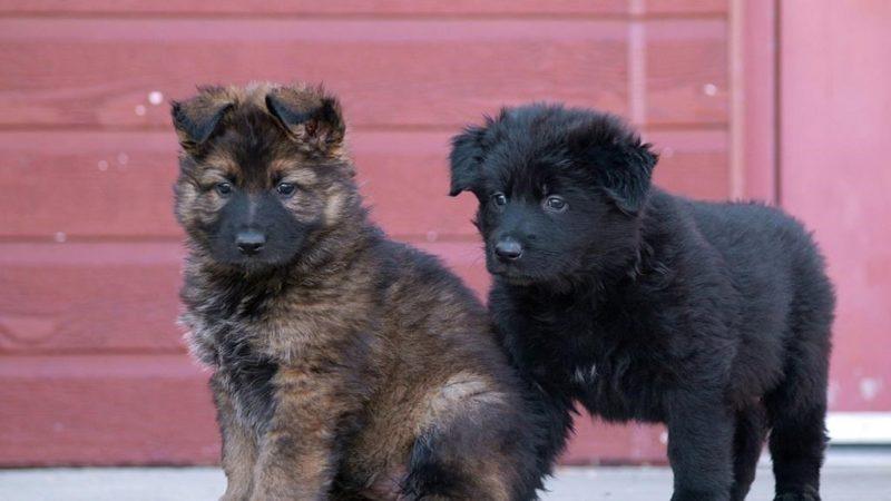 Дети дали клички собакам Канадской Королевской Конной Полиции