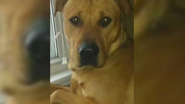 Бросивший на голодную смерть собаку приговорен к году тюрьмы