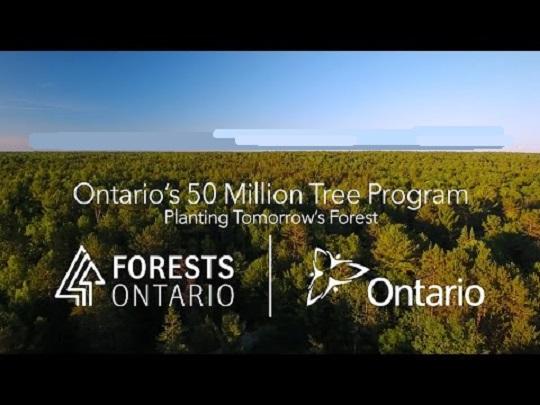 Онтарио закрывает программу по высадке деревьев