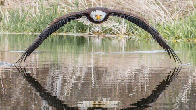 «Идеальная картинка» удалась канадскому фотографу