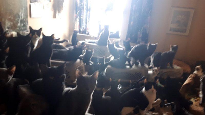 Жили-были как-то в простой торонтской квартире... 300 кошек