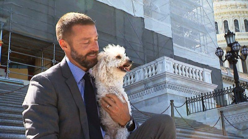 Собаки помогают реабилитации бывших уголовников