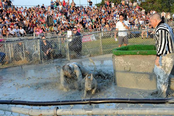 На квебекском фестивале отменили ловлю свиней в грязи