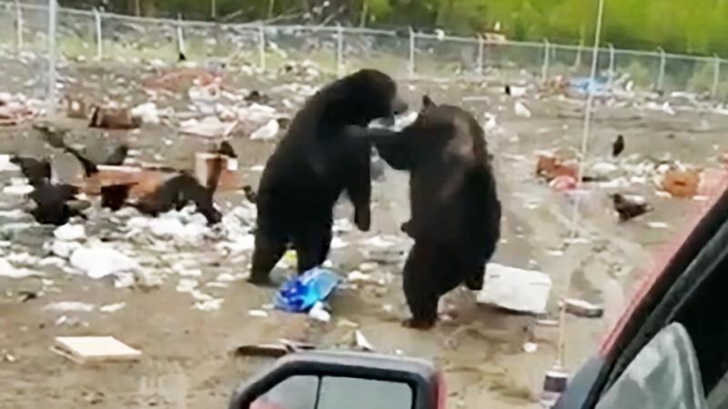Медвежий бокс