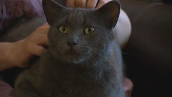 Загулявший кот нашелся через три года