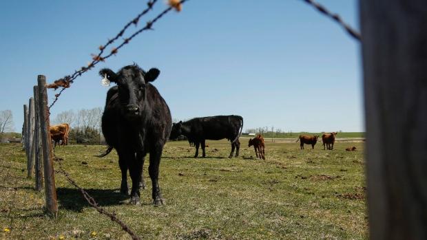 Китай готов отказаться от канадского мяса