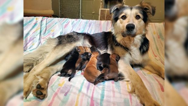 На помойке в заклеенной коробке наши собаку и девятерых щенков