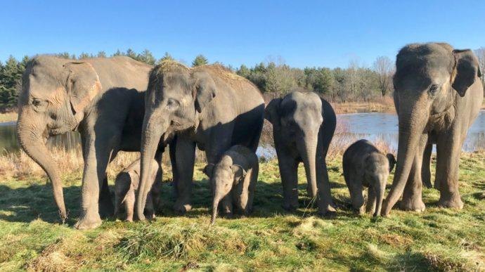 В онтарийском сафари-парке слон напал на тренера