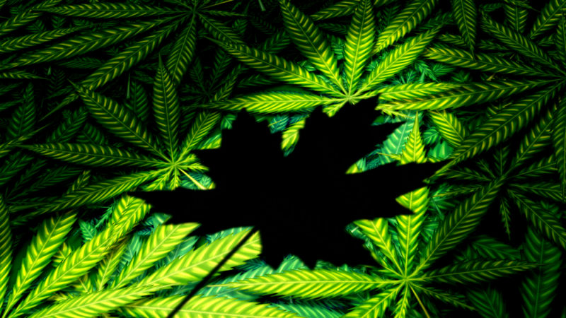 Запах марихуаны беспокоит город-спутник Оттавы
