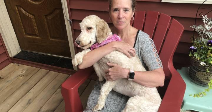 Женщина подозревает, что «собачий парикмахер» издевалась над ее подопечной