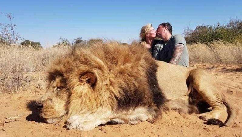 Канадцев раскритиковали за убийство африканского льва