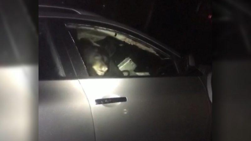 Медведь забрался в машину в жилом райoне