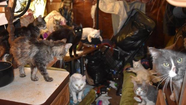 В Эдмонтоне пришлось усыпить сразу 37 кошек