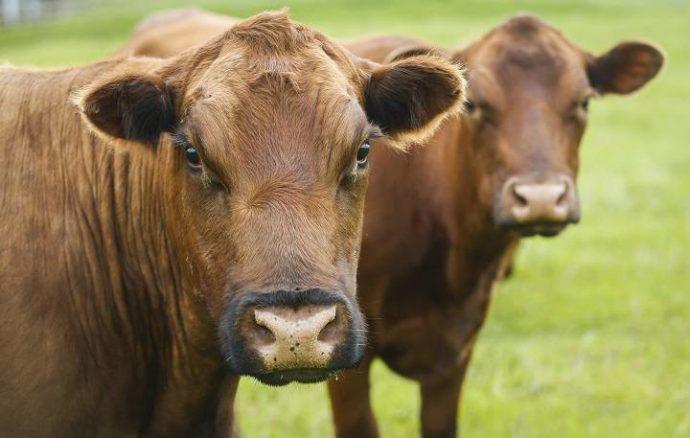 Новый закон Онтарио против жестокости по отношению к животным