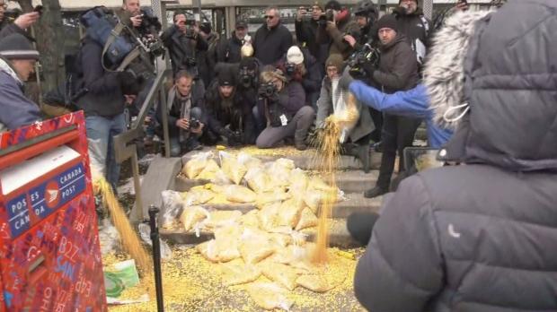 Офис премьер-министра Канады завалили кукурузой