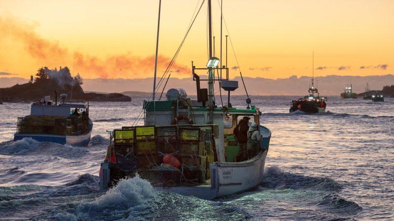 В Канаде началась «охота» на омаров