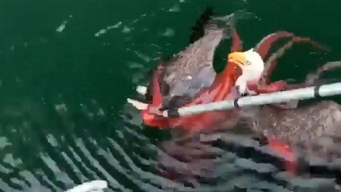 Канадцы спасли американский символ из щупалец осьминога