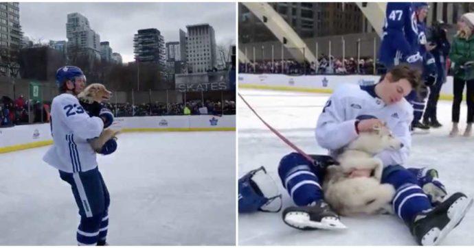Toronto Maple Leafs: здесь любят собак
