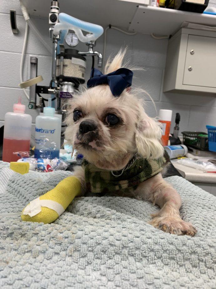 На севере от Торонто спасли 47 собак