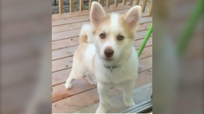 Полиция просит помощи в поисках щенка