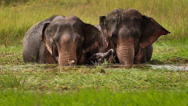 Канадцы доказали: пьяным может быть даже слон