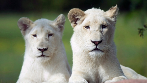 Зоопарки мира испытывают недостаток еды для животных