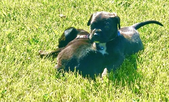 Украденные щенки найдены, подозреваемые арестованы