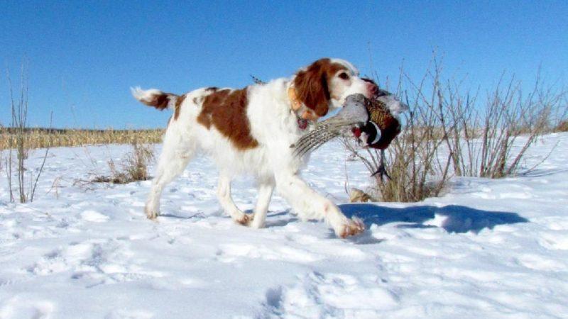 Альберта— охотничья провинция Канады