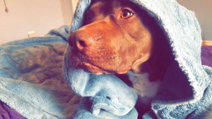 Собаку высылают из Онтарио по «расовому» признаку