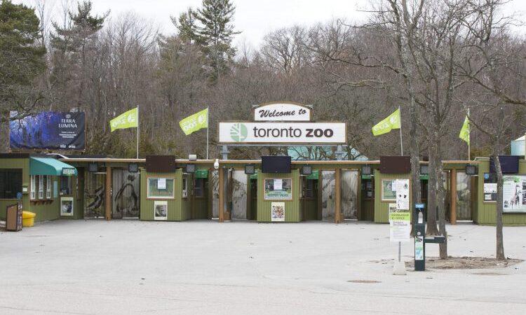 Коронавирус закрывает зоопарк в Торонто
