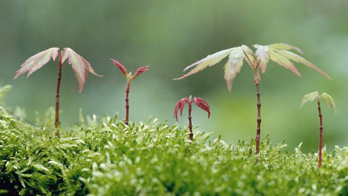 Миллиарды на озеленение Канады