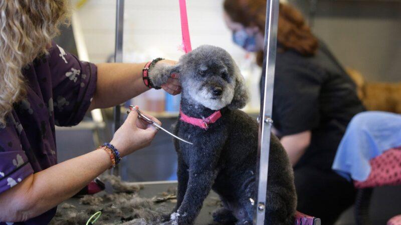 Теперь в Онтарио можно подстричь собаку