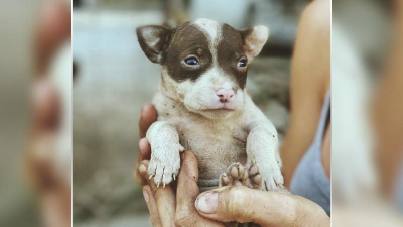 «Усыновление» собак-иностранцев под угрозой в условиях пандемии