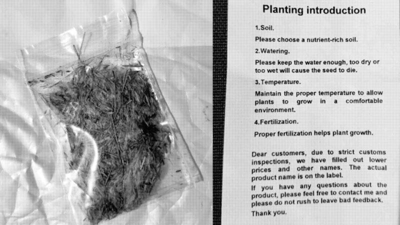 Рассылка семян канадцам— маркетинговое мошенничество