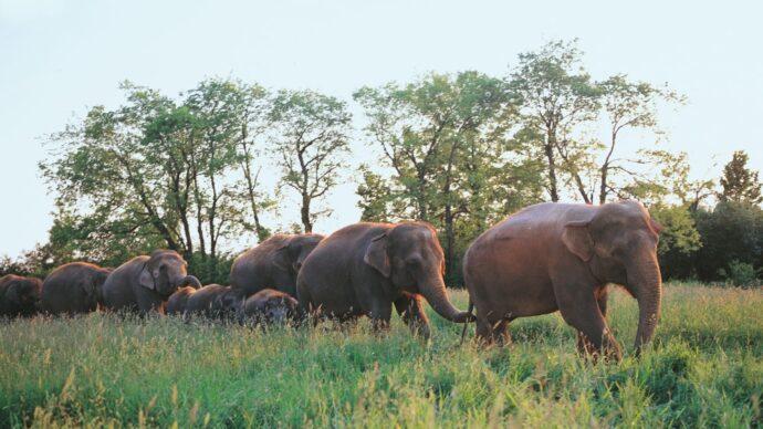 Слонам худо в онтарийском зоопарке African Lion Safari