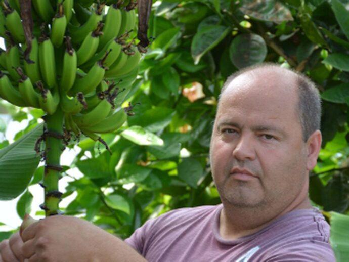 Канадская банановая ферма— реальность наших дней